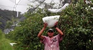 Chuva de Granizo - Luizinho (1)