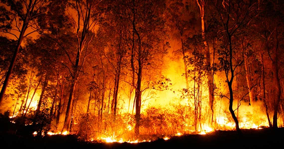 Incêndio Na Floresta Amazônica Causa Comoção Na Web